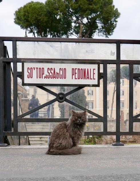 Katternas fristad vid Caesars mordplats.